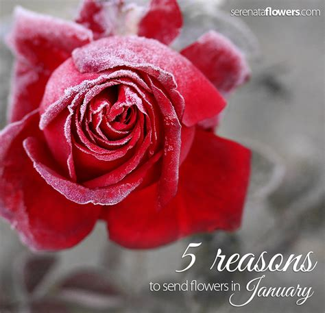 Reasons To Send Flowers by 5 Reasons To Send Flowers In January Pollennation