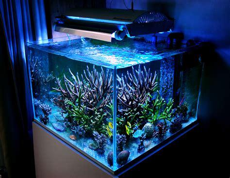 aquarium latest design archives modern aquarium design for reef aquaria and