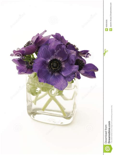 purple flowers in a vase on white background stock photo