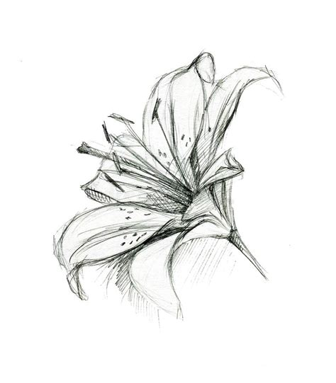 how to draw hands by lily draws on deviantart lily flower hand drawing sketch on white background