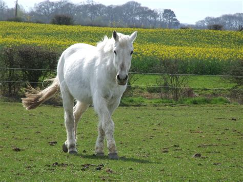 Nice Hourse by Hd Animals Wallpapers White Horse Photos