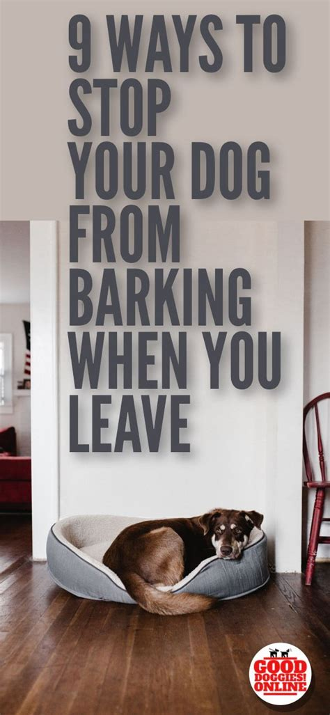 dog barks when we leave best 25 dog barking at nothing ideas on pinterest dog