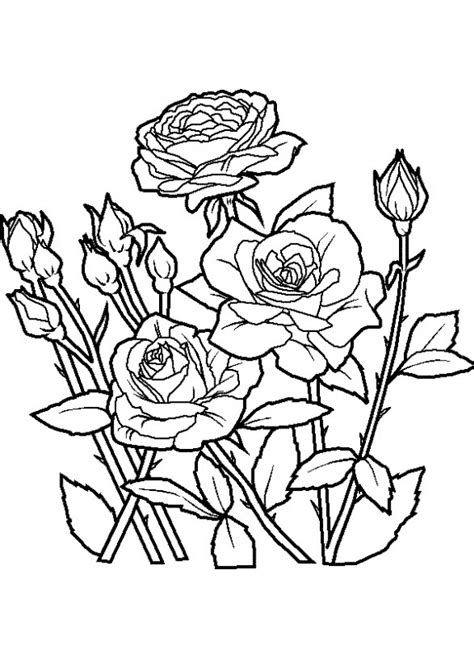 imagenes flores hermosas para colorear dibujos de rosas para colorear pintar e imprimir