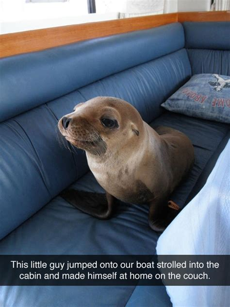 seal on couch intruder seal the meta picture