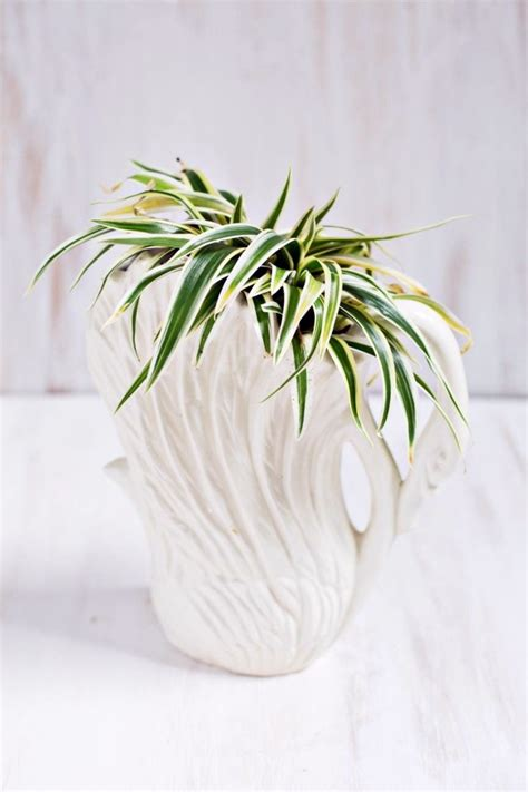 easy care indoor plants sturdy houseplants popular easy care potted plants