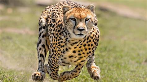 imagenes otoñales con animales 191 cu 225 l es el secreto de los animales veloces