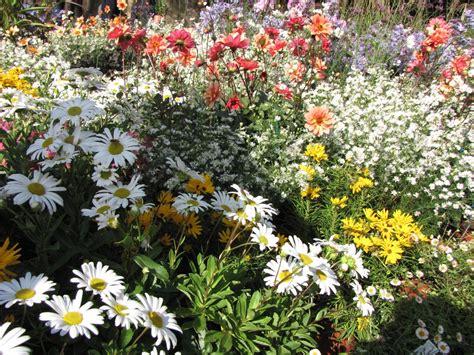 immagini di prati fioriti prati fioriti