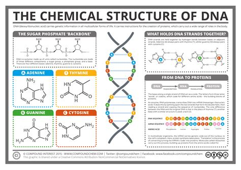 dna diagram 1000 images about dna on human genome craig