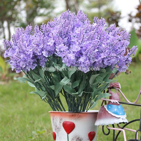 top 28 buy lavender flowers growing lavender planting caring for lavender plants buy