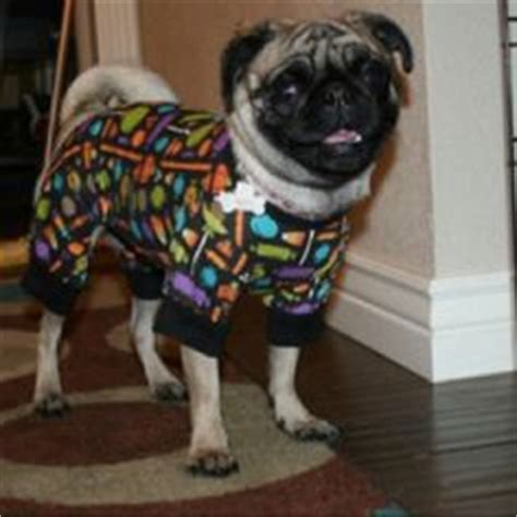 pajamas for pugs 1000 images about things for my future pug