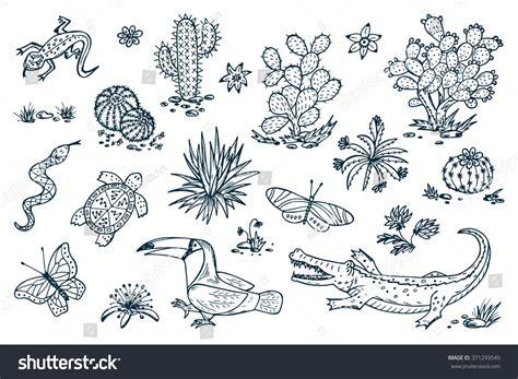 doodle flora fauna mexico vector set mexican flora fauna stock vector