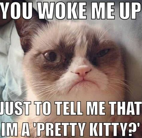 The Grumpy Cat Memes - funny angry grumpy cat memes collection for friends family