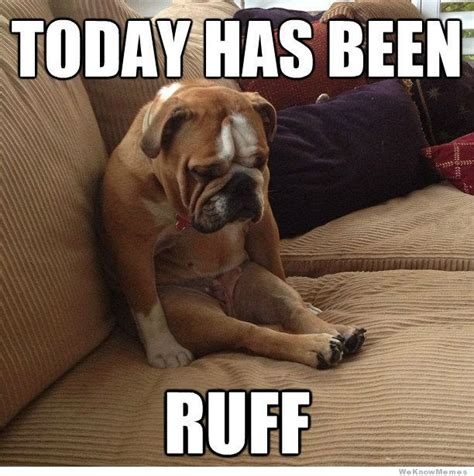 Memes About Dogs - 1 today has been ruff we adore this pooped french bull