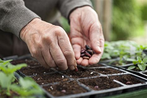 starting  vegetable garden  seeds  seedlings