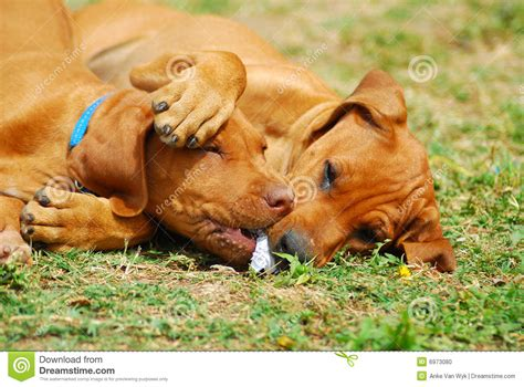 puppy playtime puppy playtime stock photo image 6973080