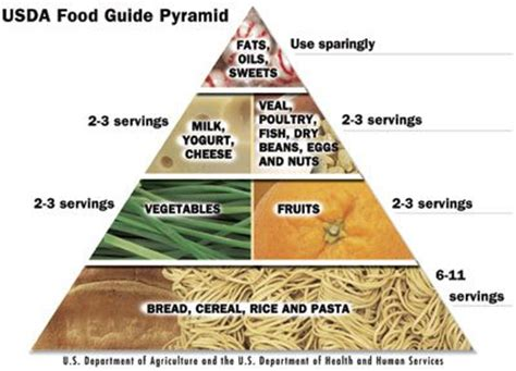 healthy fats usda image gallery food pyramid