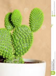 plante d int 233 rieur mise en pot de cactus photo stock