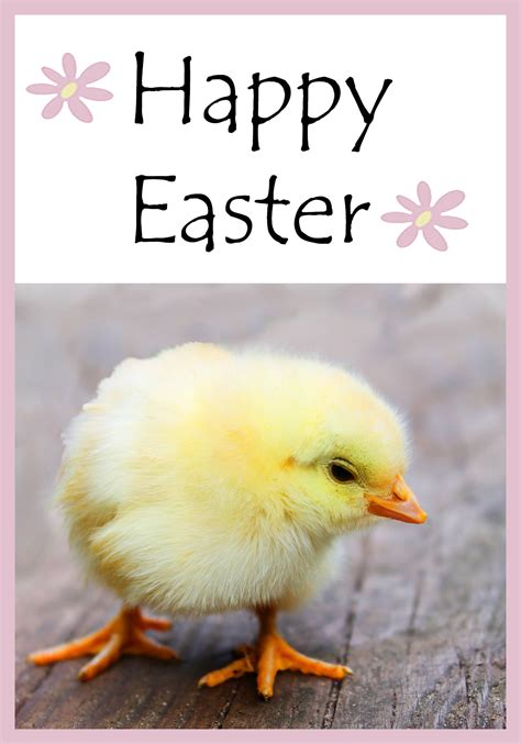 easter rubber sts chicken cards 100 images brahma cards greeting photo
