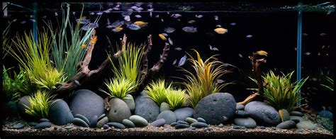 aquarium design hd cuisine live freshwater aquarium fish simple aquarium