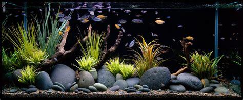 freshwater aquarium design photos how to set up a fresh water aquarium wishforpets