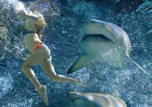 know your shark risk generosity wealth management llc boulder