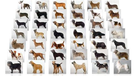 all types of dogs all breeds many
