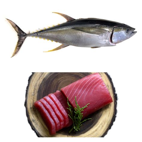 Tuna Fish Frozen frozen yellowfin tuna hilo fish co