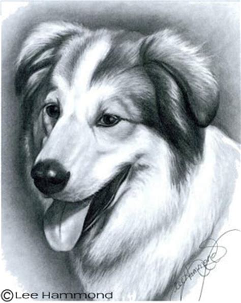 drawing realistic pets from photographs: step by step art