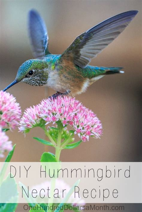 diy hummingbird nectar recipe one hundred dollars a month