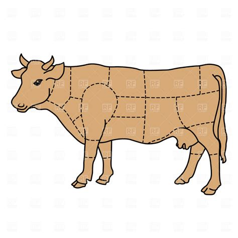 cow diagram cow cattle diagram royalty free vector clip