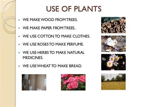 How Do We Make Paper - ppt s1u7 plants