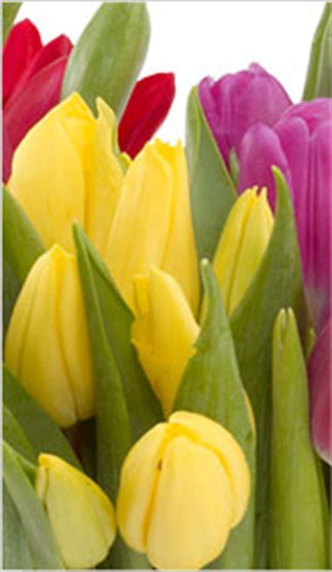 astro flower flower astrology