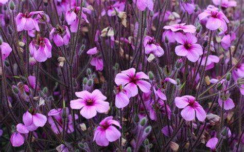 ansia rimedi naturali fiori di bach rimedi naturali per ansia e stress naturopataonline