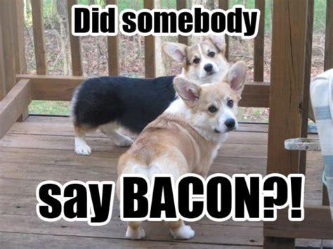 Corgi Meme - best corgi memes part 1 corgi dogs corgi meme