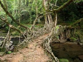 What Is Root Bridge
