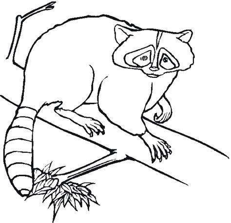 printable coloring pages woodland animals free coloring pages of forest animals