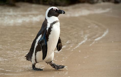 Why We Should Care About Penguin Awareness Day