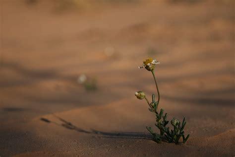 fiore nel deserto un fiore nel deserto juzaphoto