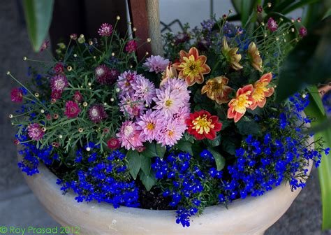 outdoor flower arrangements in pots www pixshark com