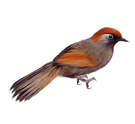 imagenes de aves sin fondo bird png