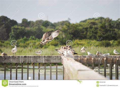 cape may bird sanctuary stock photo image of pond jersey