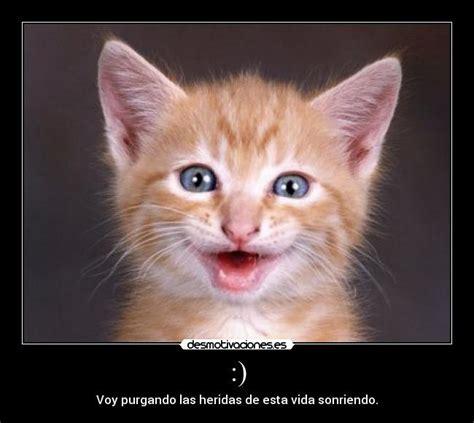 imagenes feliz lunes con gatos imagenes de gatitos sonriendo imagui
