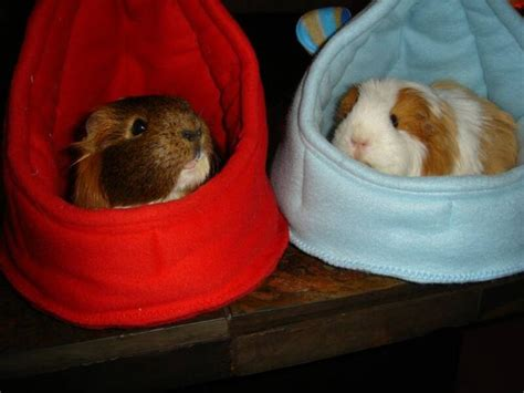 how to make a guinea pig bed how to make a guinea pig bed 28 images guinea pig ikea doll bed youtube cali cavy