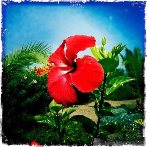national flower of turkish cyprus: walt51: galleries