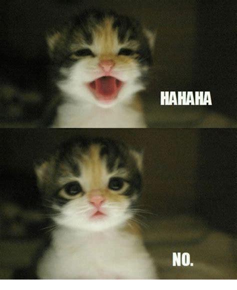 Cute Cat Meme Generator - 25 best memes about cute cat meme generator cute cat