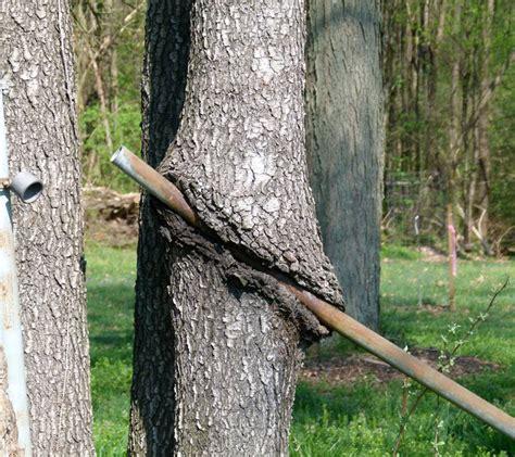 alberi 171 divoratori 187 quando la natura riprende il
