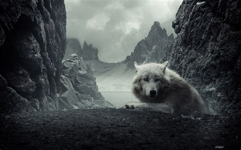 wolf background   awesome wallpapers