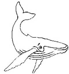 whale coloring pages free coloring pages of baby whales