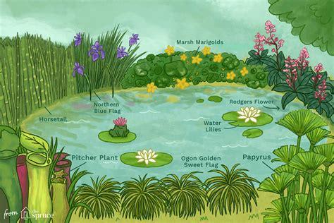 great plants  small backyard ponds