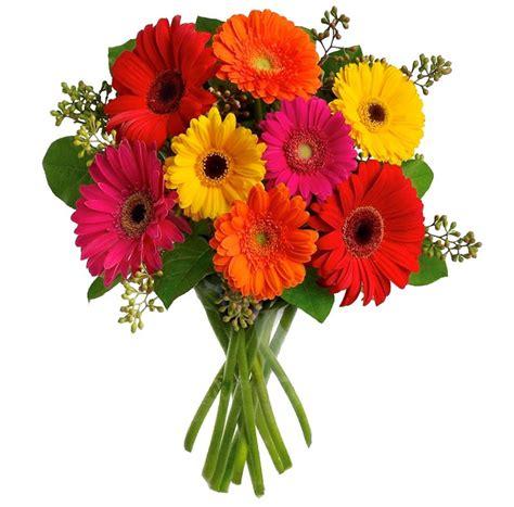 imagenes flores gerberas buqu 234 de flores cores das g 233 rberas floricultura uniflores